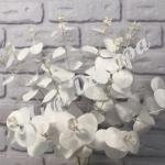 Куст эвкалипта. Белый