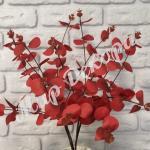 Куст эвкалипта, красный