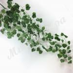 Кусты березки длинные для создани зелёных арок