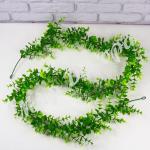 Лиана эвкалипта зеленая