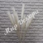 Пампасная трава, Белый