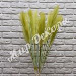 Пампасная трава, Оливка