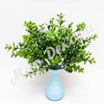Самшит тонированный, оливка