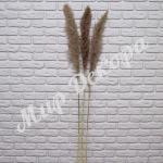 Пампасная трава, Серо-коричневый